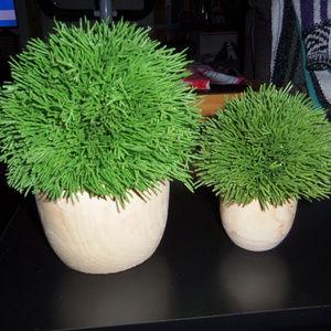 2 Artificial Cypress Arrangements in Wooden Pots